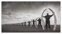 Line of Rangers w Tusks of Killed Elephants, 2011